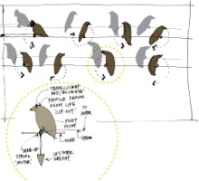 Anjali Grant - Birds on a Wire concept drawing, South Lake Union
